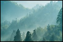 Forested hills with fog. Xidi Village, Anhui, China ( color)