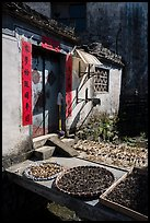 Harvest drying in front of village house. Xidi Village, Anhui, China ( color)