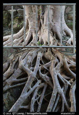 Roots and fence, Guandu Temple. Taipei, Taiwan