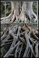 Roots and fence, Guandu Temple. Taipei, Taiwan (color)