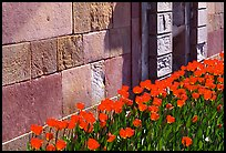 Tulips and wall, royal residence of Drottningholm. Sweden (color)