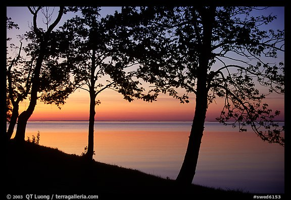 Trees and sunset on Vattern Lake, Vadstena. Gotaland, Sweden
