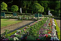 Flowers in formal gardens of the Versailles palace. France ( color)