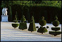 Hedged trees, Versailles palace gardens. France ( color)