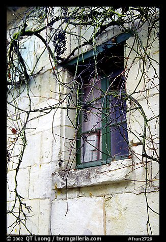 Window with dried grapes. Loire Valley, France (color)