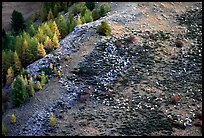 Herd of sheep on mountainside. Maritime Alps, France