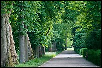 Chestnut trees, alley in English Garden, Palace of Fontainebleau. France