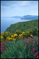 Wildflowers and Mediterranean seen from Route des Cretes. Marseille, France ( color)