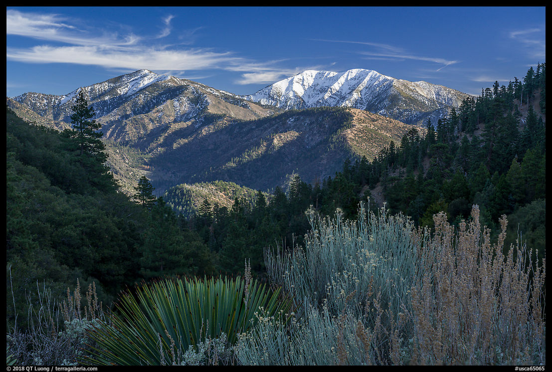 Desert shrubs, pine forests, and  Mount San Antonio from Vincent Gap. San Gabriel Mountains National Monument, California, USA