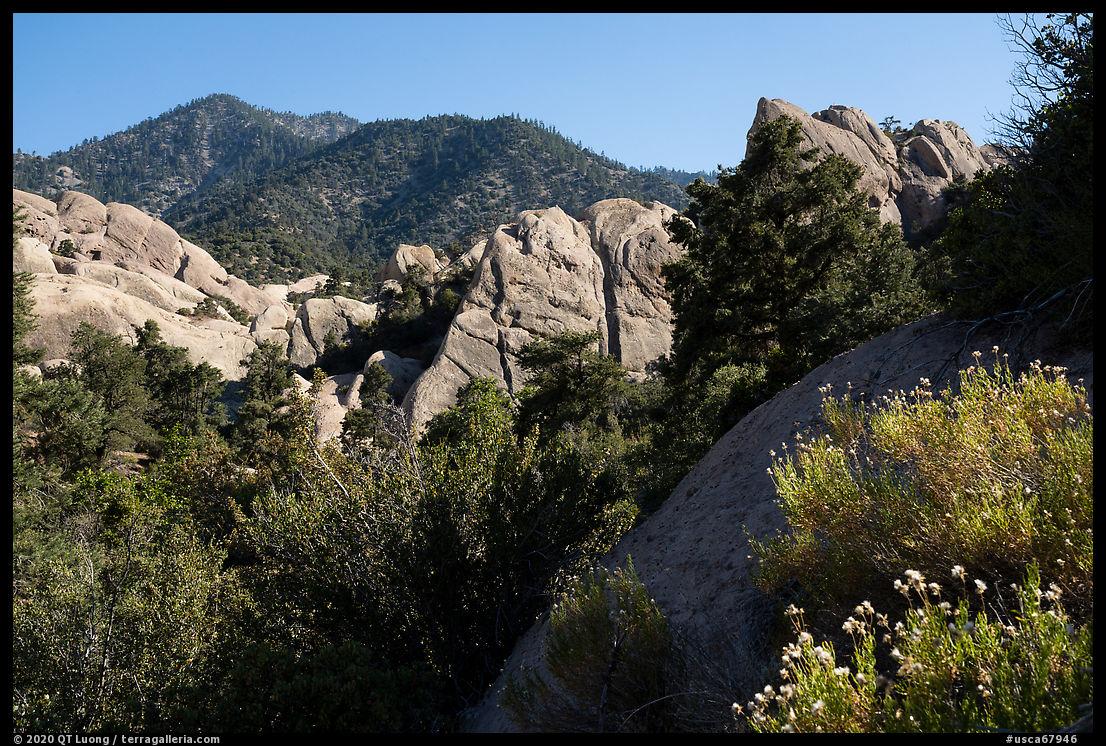 Wildflowers, Devils Punchbowl sandstone. San Gabriel Mountains National Monument, California, USA