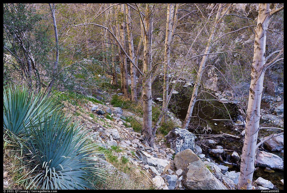 East Fork San Gabriel River gorge with yuccas and trees. San Gabriel Mountains National Monument, California, USA