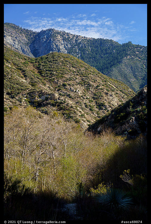 Trees with new leaves and shadows in deep East Fork San Gabriel River Canyon. San Gabriel Mountains National Monument, California, USA