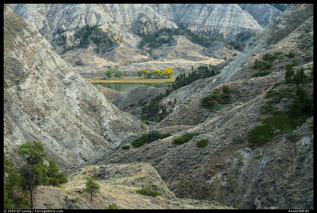 Badlands and cottonwoods in autumn foliage. Upper Missouri River Breaks National Monument, Montana, USA