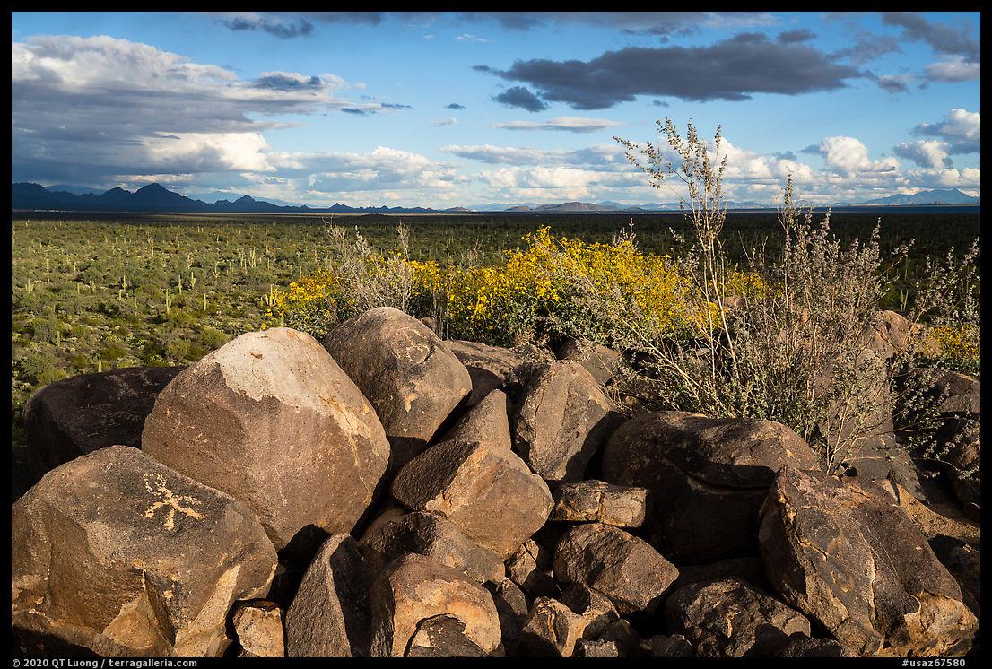 Boulders with petroglyphs, brittlebush, and Avra Valley. Ironwood Forest National Monument, Arizona, USA