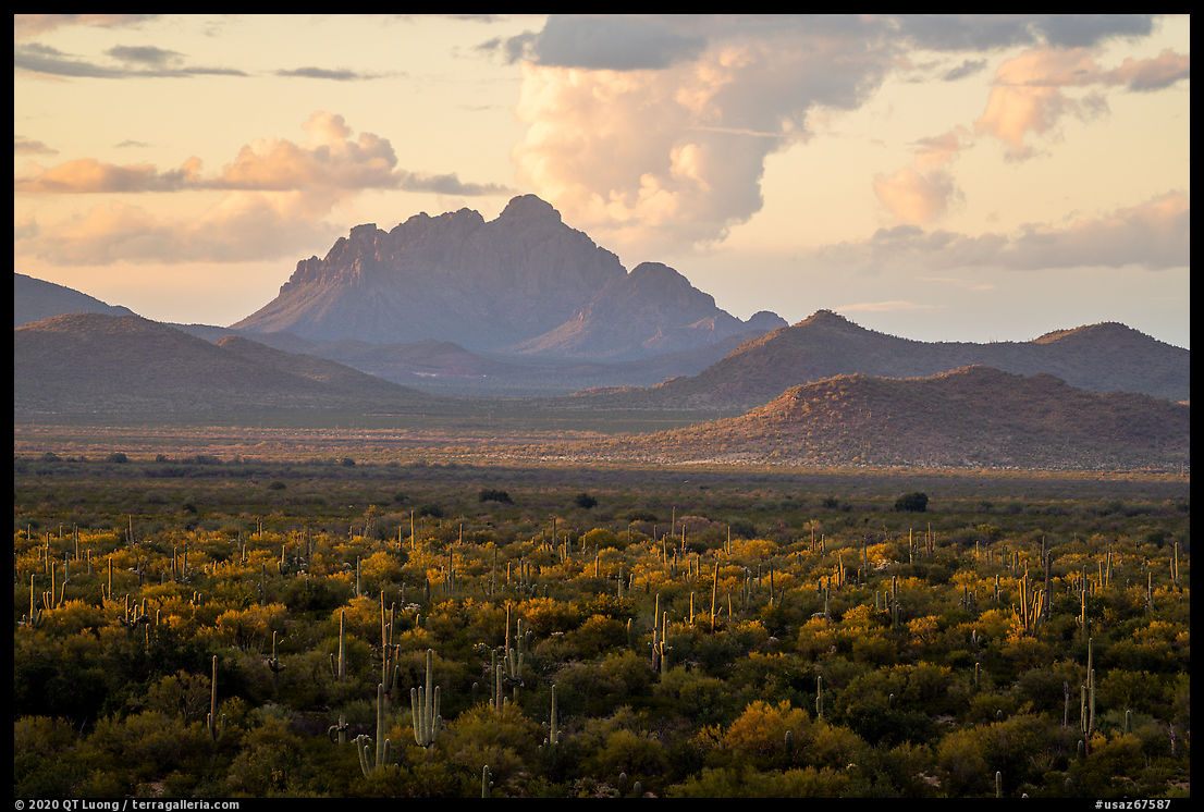 Desert plains with Ragged Top in the distance at sunset. Ironwood Forest National Monument, Arizona, USA