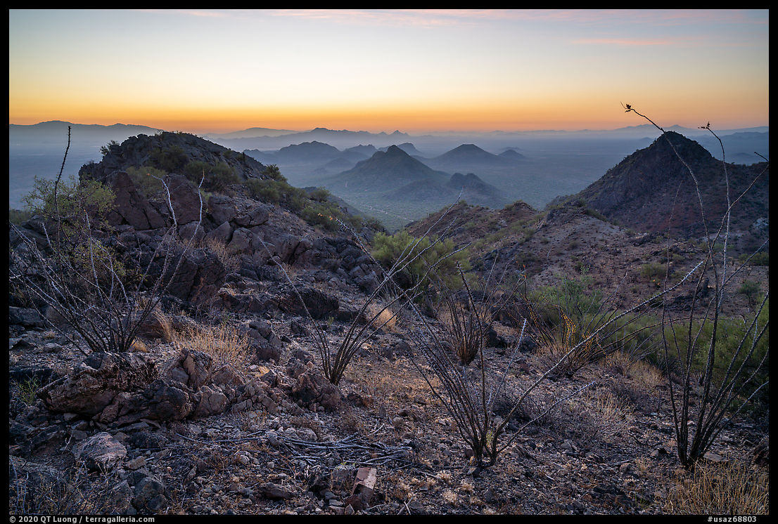 Ocotillo and desert peaks from Waterman Mountains at dawn. Ironwood Forest National Monument, Arizona, USA
