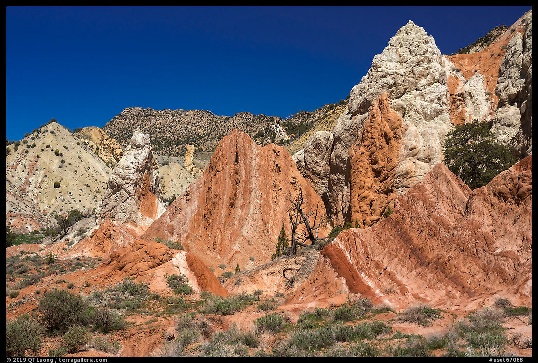Candyland Hill. Grand Staircase Escalante National Monument, Utah, USA