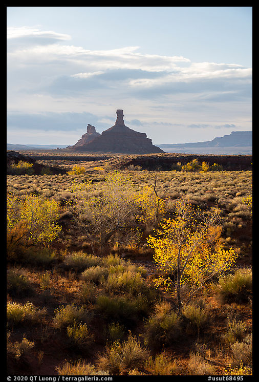 Trees in autumn foliage and spires, Valley of the Gods. Bears Ears National Monument, Utah, USA