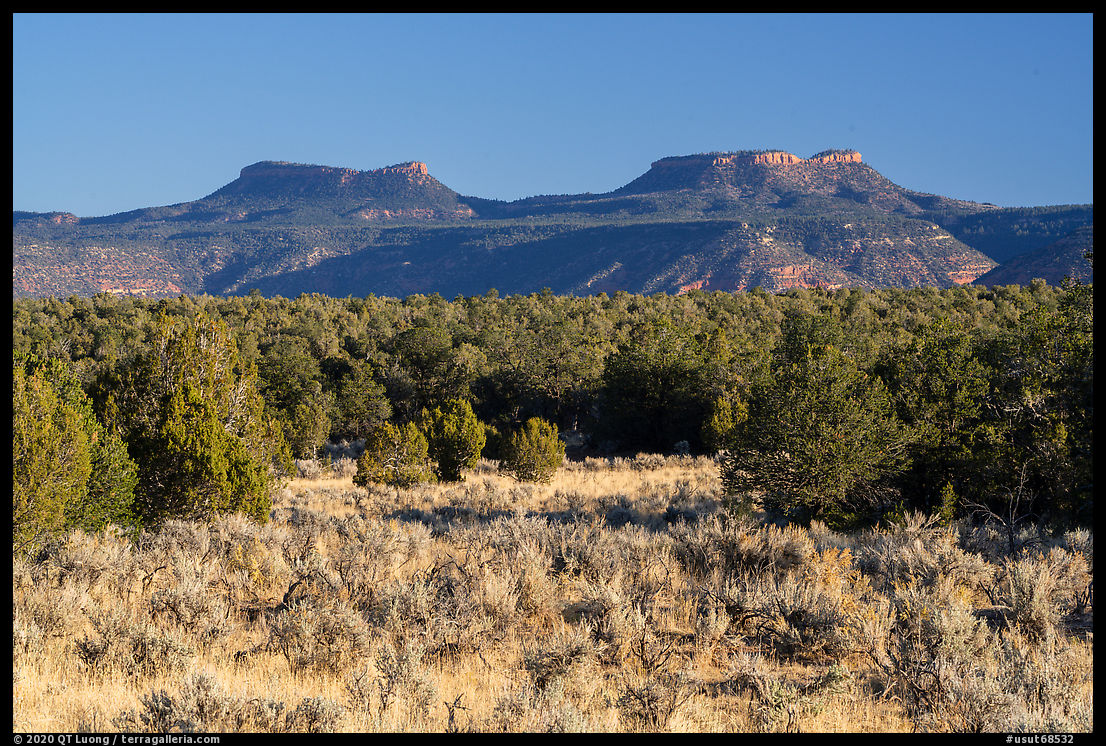 Sage, junipers, and Bears Ears Buttes. Bears Ears National Monument, Utah, USA