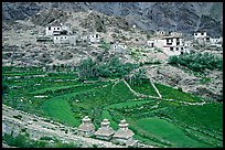 Chortens, cultivated terraces,  and village, Zanskar, Jammu and Kashmir. India (color)