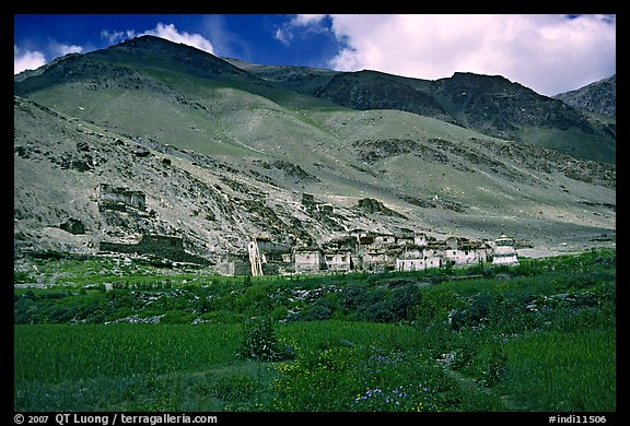 Field of barley grasses, village, and hills, Zanskar, Jammu and Kashmir. India (color)