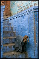 Goat covered with blanket on a blue entrance steps. Jodhpur, Rajasthan, India (color)