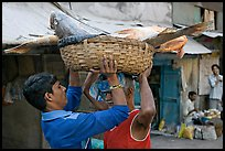 Men unloading basket with huge fish from head, Colaba Market. Mumbai, Maharashtra, India ( color)
