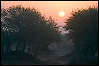 Trees at sunrise, Keoladeo Ghana National Park. Bharatpur, Rajasthan, India ( color)