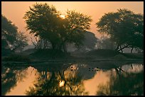 Pictures of Keoladeo Ghana, Bharatpur