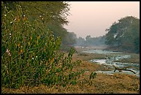 Wetlands at dawn, Keoladeo Ghana National Park. Bharatpur, Rajasthan, India ( color)