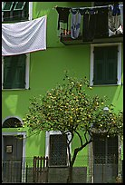 Green house facade with tree and hanging laundry, Riomaggiore. Cinque Terre, Liguria, Italy ( color)