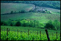 Pictures of Vineyards