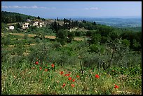 Flowers and rural landscape, Chianti region. Tuscany, Italy (color)