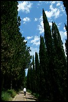 Alley bordered by cypress trees. Tuscany, Italy ( color)