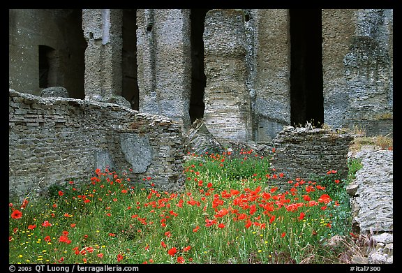 Red poppies and ruins of the Praetorium, Villa Adriana. Tivoli, Lazio, Italy