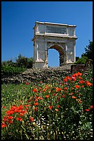 Popies and Arch of Titus, Roman Forum. Rome, Lazio, Italy ( color)
