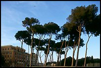 Pines trees and houses. Rome, Lazio, Italy