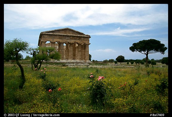 Wildflowers and Temple of Neptune. Campania, Italy (color)