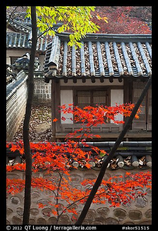 Bright autumn leaves and traditional architecture, Yeongyeong-dang, Changdeok Palace. Seoul, South Korea (color)