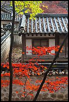 Bright autumn leaves and traditional architecture, Yeongyeong-dang, Changdeok Palace. Seoul, South Korea