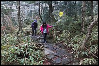 Hikers on Eorimok trail, Mt Halla. Jeju Island, South Korea ( color)