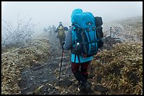 Backpackers on trail in fog, Hallasan. Jeju Island, South Korea (color)