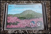 Frosted sign depicting spring landscape, Hallasan. Jeju Island, South Korea ( color)