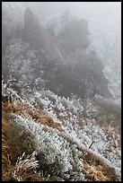 Frozen grasses and pinnacles in fog, Hallasan. Jeju Island, South Korea (color)