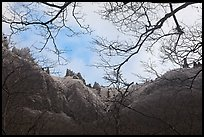 Pinnacles and bare branches, Mt Halla. Jeju Island, South Korea (color)