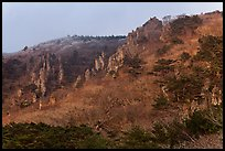 Forest and pinnacles, Hallasan National Park. Jeju Island, South Korea ( color)