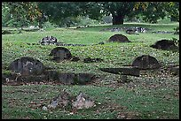 Tombs and trees, Bukit China cemetery. Malacca City, Malaysia ( color)