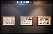 Butterfly exhibit, Sentosa Island. Singapore