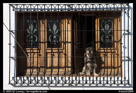 Window with forged metal grid and dog, Tlaquepaque. Jalisco, Mexico