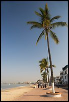 Palm trees on the Malecon, morning, Puerto Vallarta, Jalisco. Jalisco, Mexico ( color)
